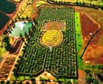 Dole Pineapple Plantation maze